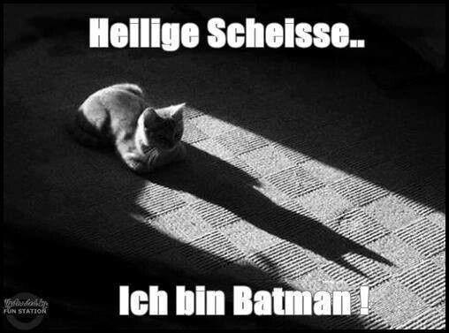Ich Bin Batman Kitten Cat Lustige Bilder Batman Und