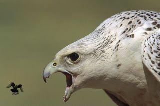 Bird Panosundaki Pin