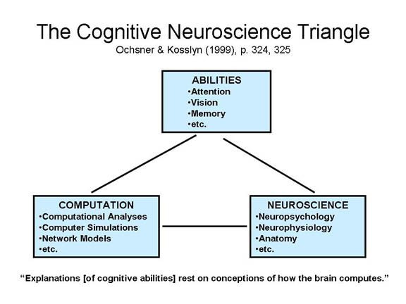 Cognitive Neuroscience Trinagle With Images Cognitive System