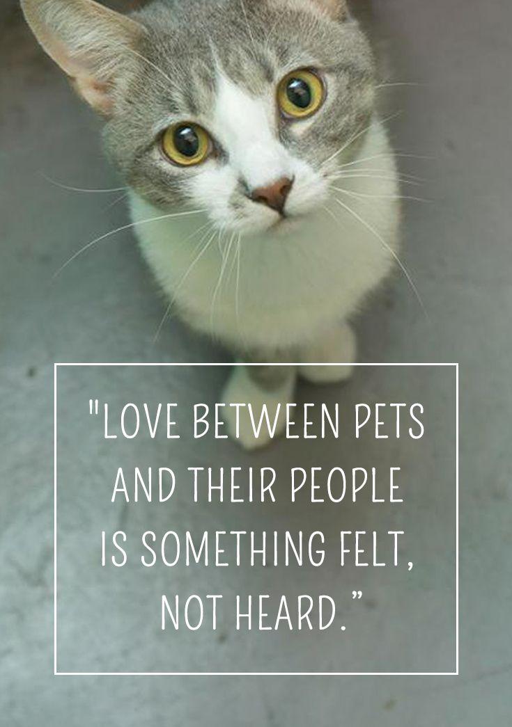 About Pet Adoption Petfinder Pet Quotes Cat Animal Adoption Quotes Pet Adoption