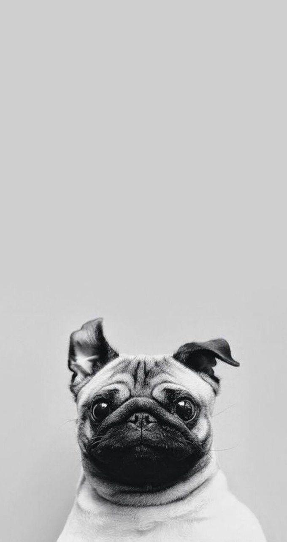 Pin by Алина Ершова on Собаки pinterest wallpaper cellphone