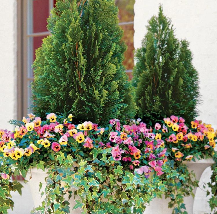 Garten Große Blumenkübel bepflanzen – 60 Ideen, Bilder und ...