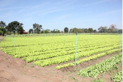 Prefeito de Bataguassu descumpre Lei Federal que rege Programa da Agricultura Familiar