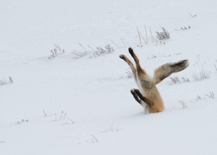 Da muss man den Kopf doch nicht gleich in den Sand... äh ... in den Schnee...