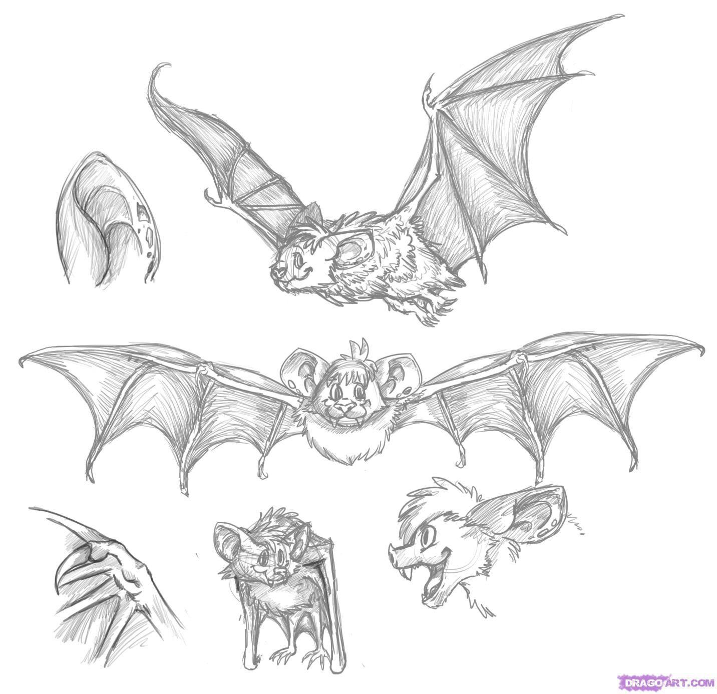 Bat Drawings