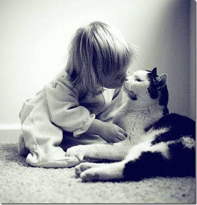 Algo Especial: Abandonar un gato, una gran maldad