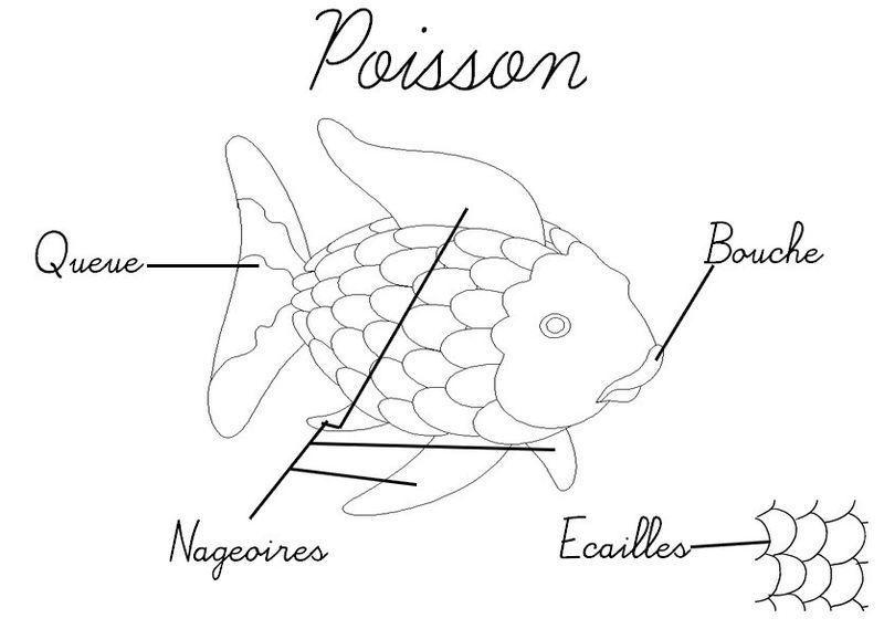 Resultado de imagen para le poisson vocabulaire