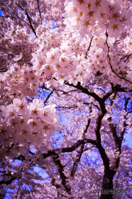 My Change For A Ten Weigh In Friday Blossom Trees Cherry Blossom Blossom