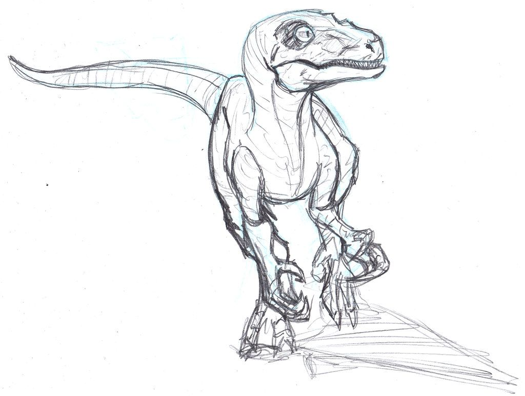 velociraptor drawing - Google Search | Dinosaurios | Pinterest ...