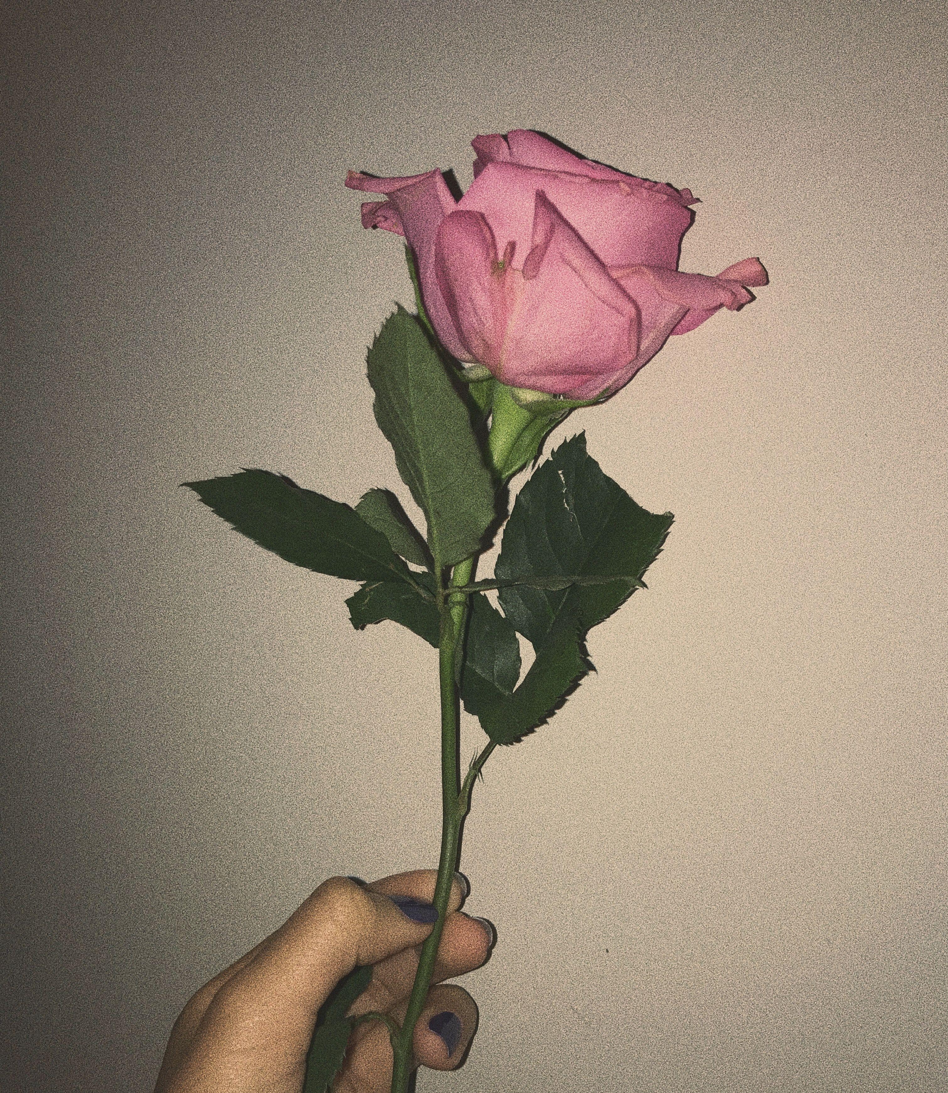 Pinterest Bruhhitsnayelli Instagram Itznayelli Rose