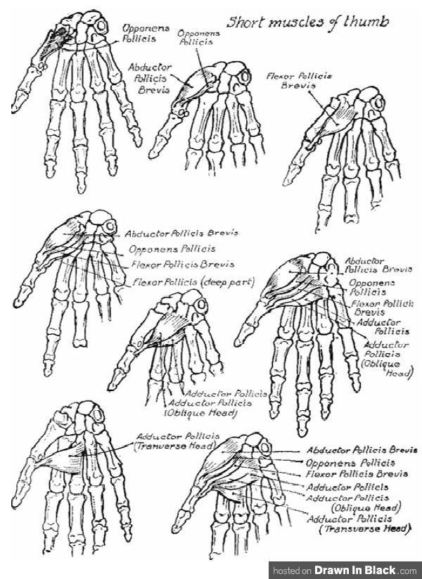 Victor Perard - Drawing and Anatomy | Anatomical drawings ...