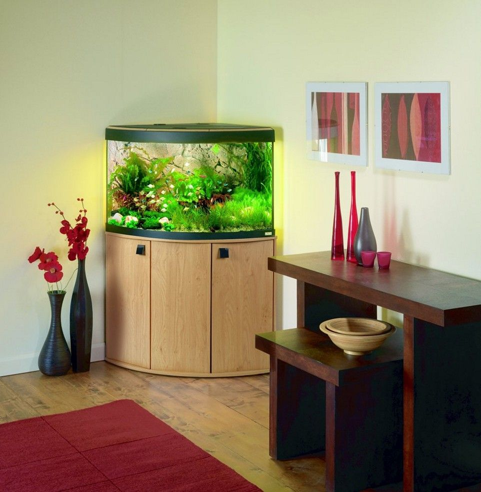 Small Modern Fish Tank Pictures
