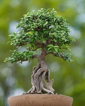 How to Take Care of Bonsai Tree - Spot On Solutions #bonsaiplants