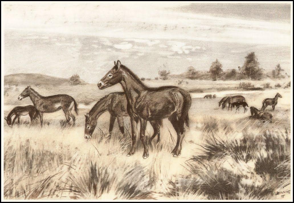 Mesohippus | Zdeněk Burian (1905-1981) | Prehistoric Animals (1960)