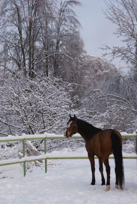 Kabarda - photos - equestrian.ru