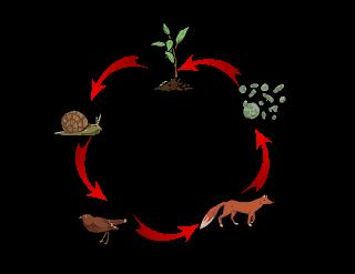 Resultado De Imagen Para Animales De La Selva Cadena Alimentaria Animales De La Selva Cadena Alimentaria Animales