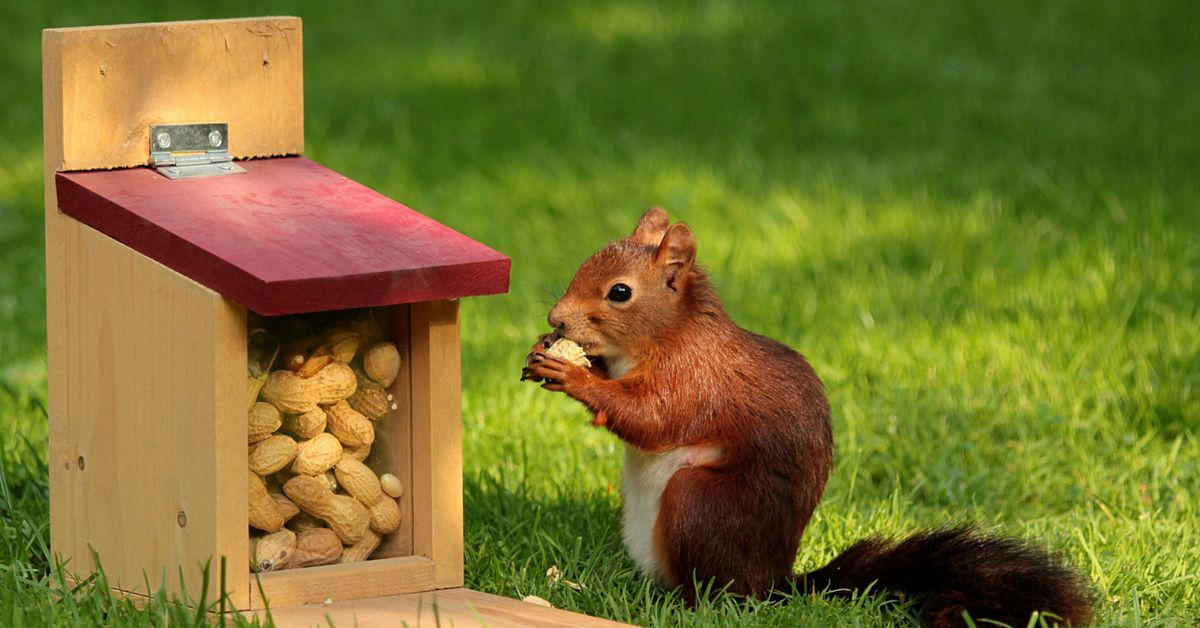 Do you know how much damage squirrels can do once they get