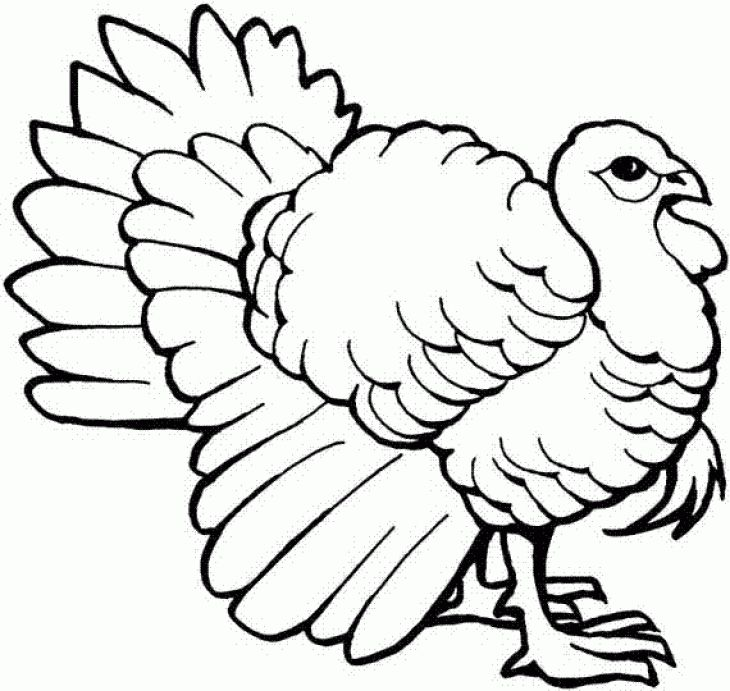 Wild Turkey Coloring Page To Print Online | Animal Coloring Pages ...