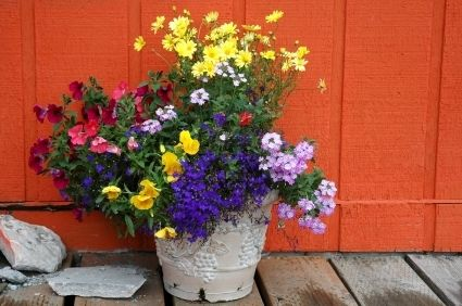 Top 25 ideas about Container Gardening on Pinterest Gardens