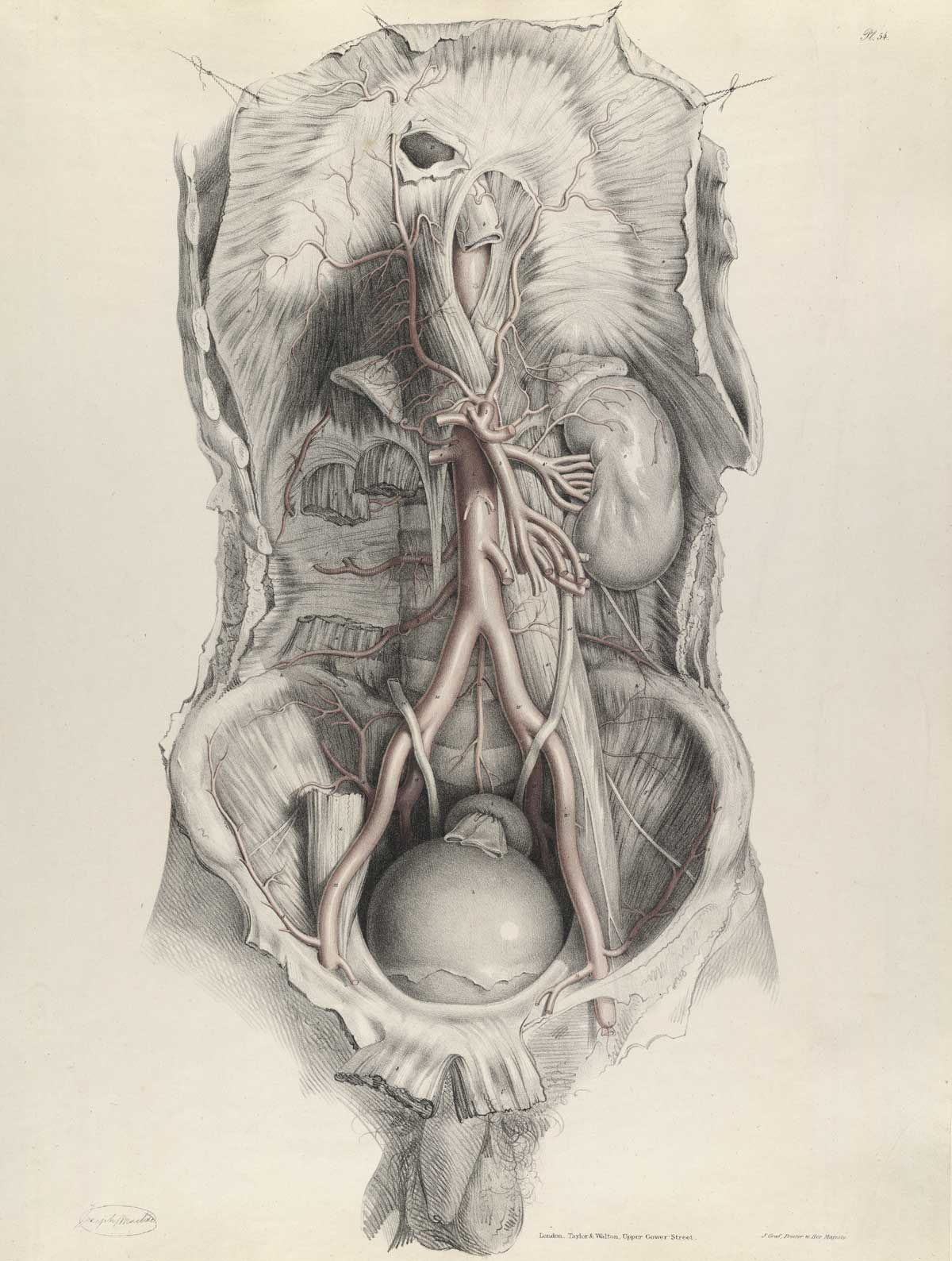 Richard Quain: The anatomy of the arteries of the human body