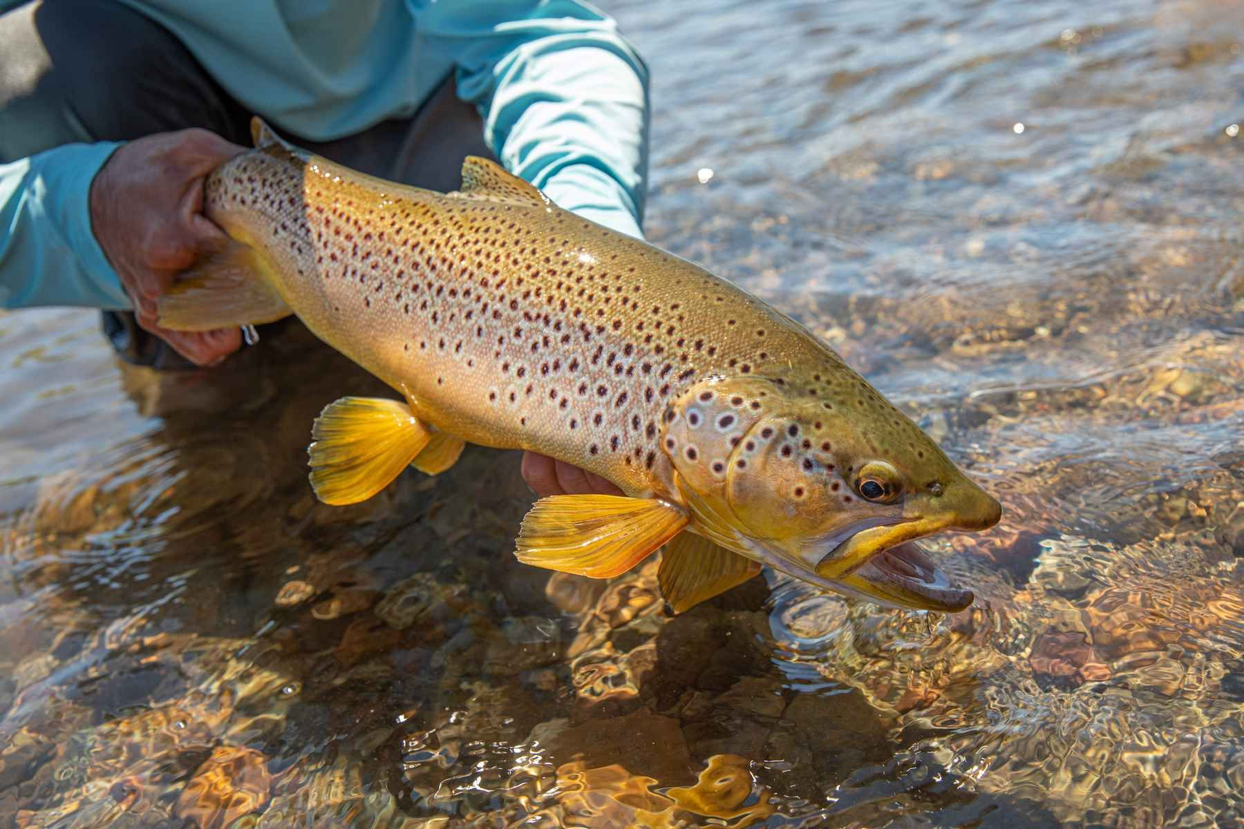 Get Your Gear Ready For Trout Season Hatch Magazine Trout Trout Photos Fishing Pictures