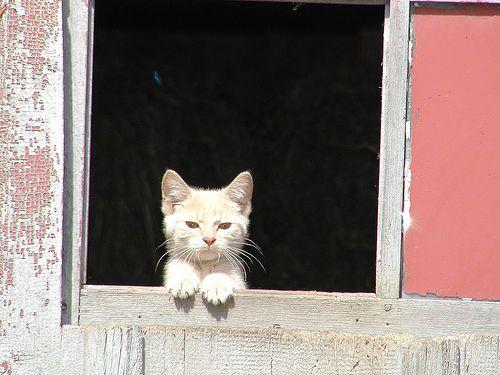 Curious cat peeking through a window