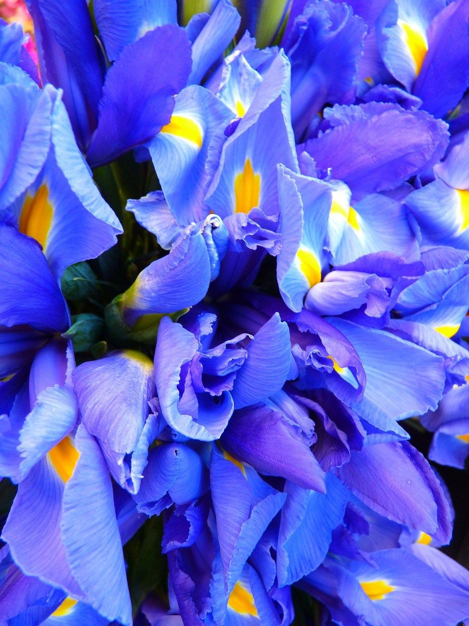 The Real Meaning Behind These 8 Most Popular Flower Colors