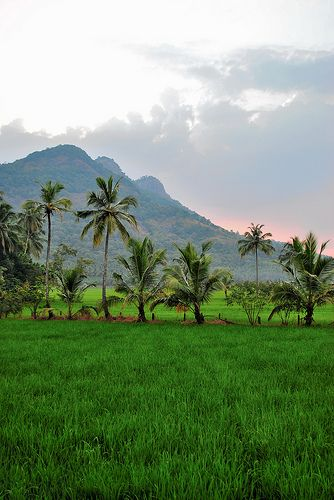 Keralam With Images Nature Photography Village Photography Beautiful Nature