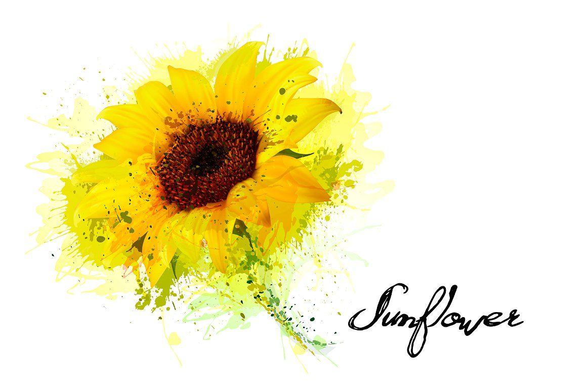 Yellow Sunflower Vector Sunflower Photo Yellow Sunflower