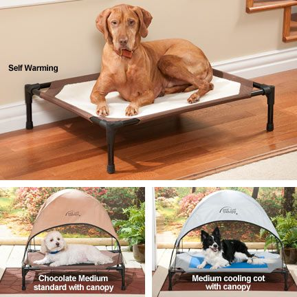 Keep Your Dog Off The Hard Ground With An Elevated Pet Cot That
