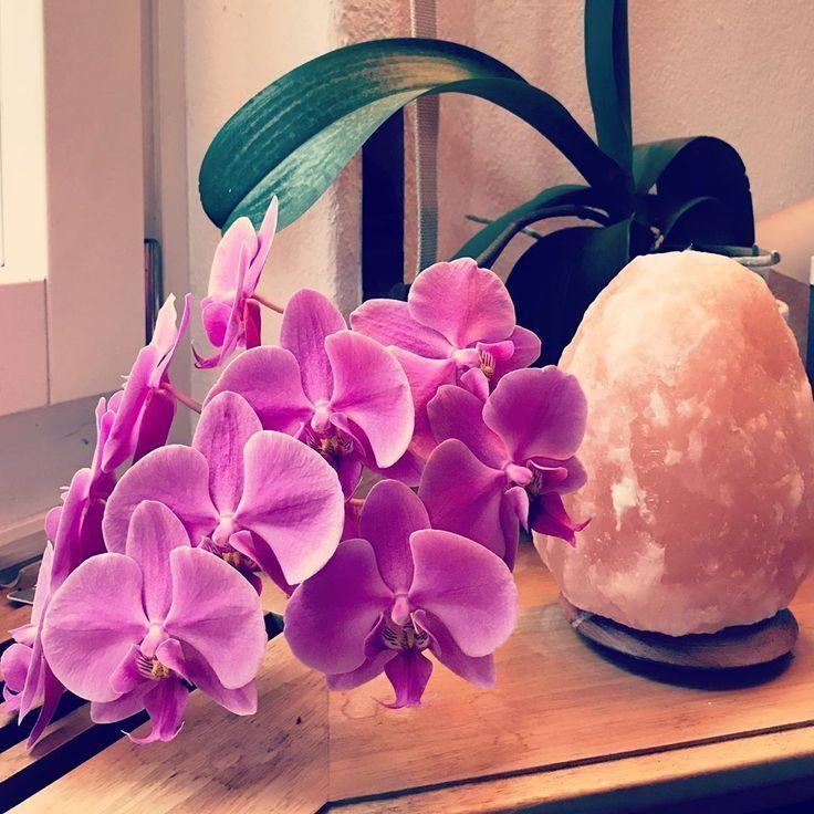 In seiner ganzen Pracht. Orch # Orchideen # Orchidee # Pflanzen # Geduld #Natur #orchideenpflege