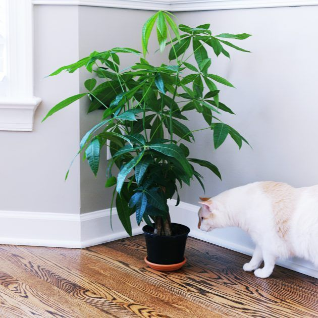 Bringing Nature Indoors House Plants That Are Safe For Cats Plants House Plants Indoor Plants Low Light