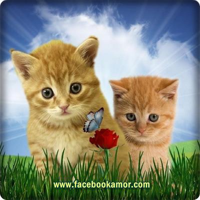 De para fotos bonitas perfil facebook +100 FRASES