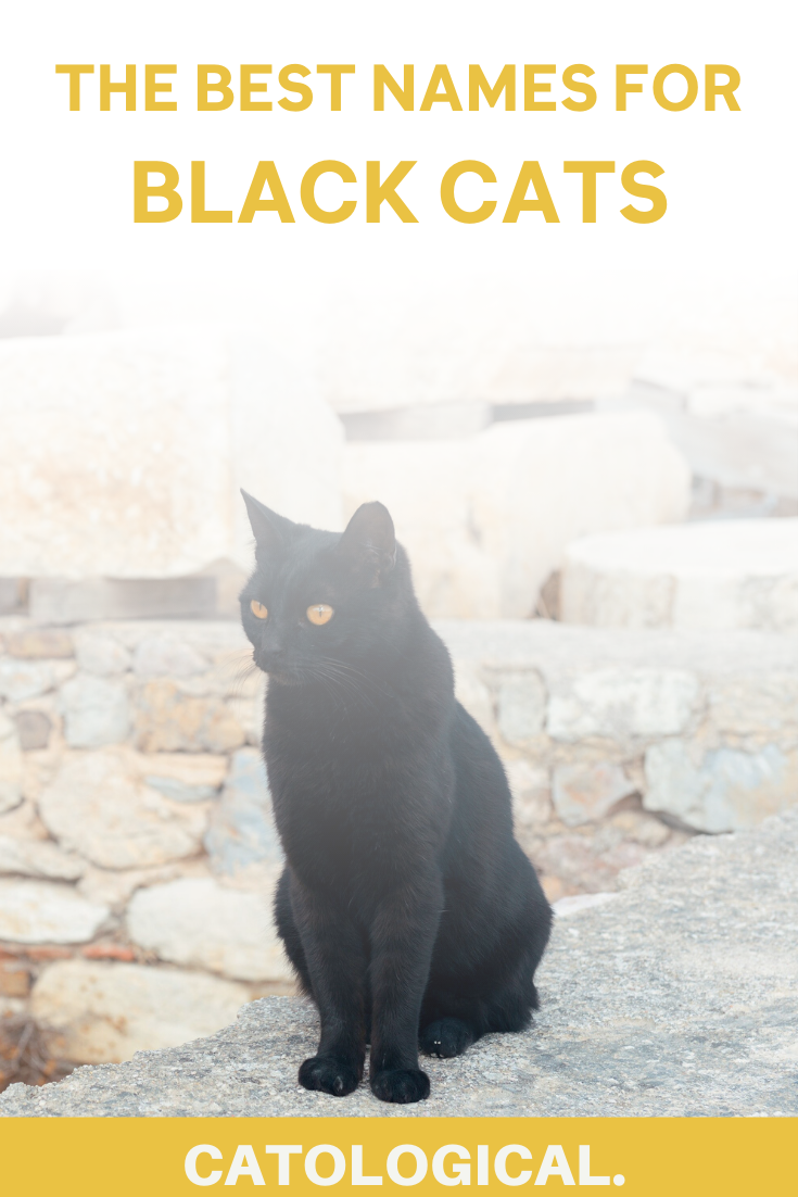 Top 150 Names For Black Cats Funny Unique Pop Culture Inspired Classic And More In 2020 Names For Black Cats Cute Cat Names Grey Cat Names