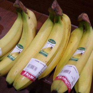 pisang cavendish Sunpride