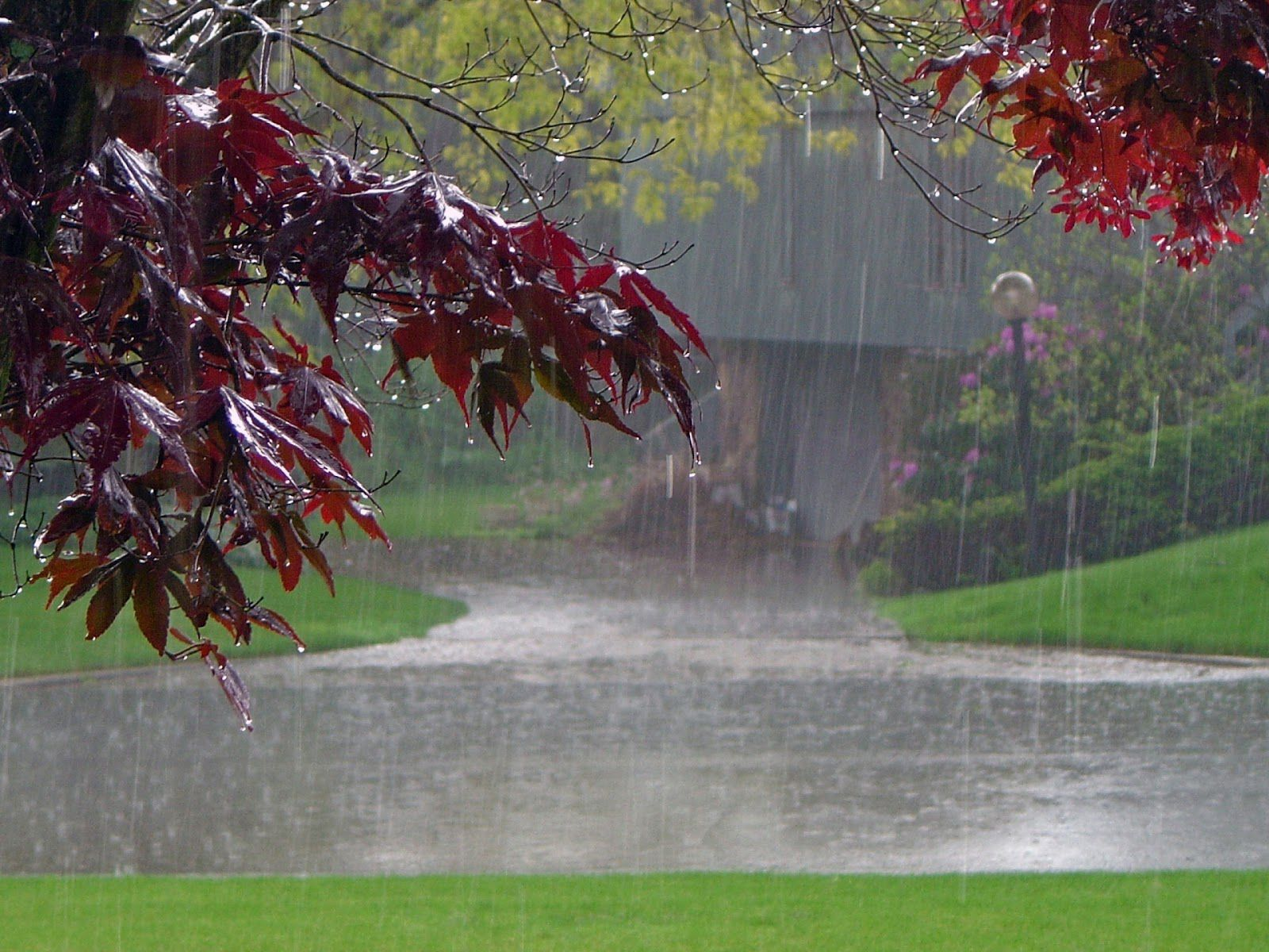 Rainy Nature Wallpapers Rain Wallpapers Nature Wallpaper Sound Of Rain