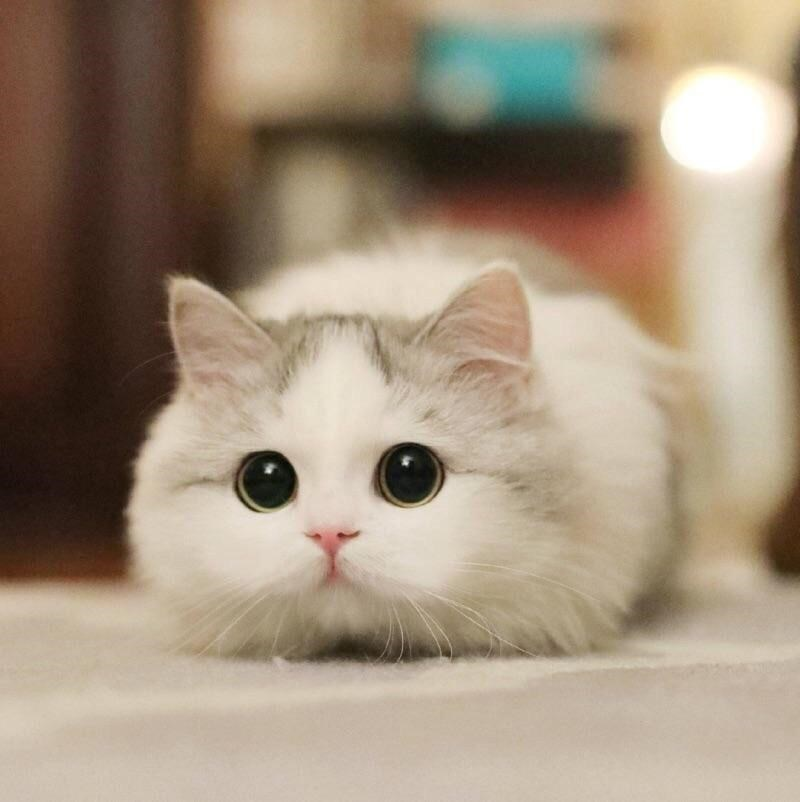 Wide-Eyed And Ready to Pounce Cats (26 Photos)