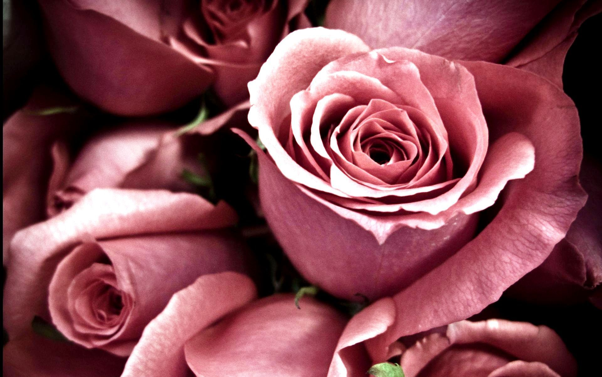 Rose Wallpapers For Desktop Full Size Hq Images 12 HD