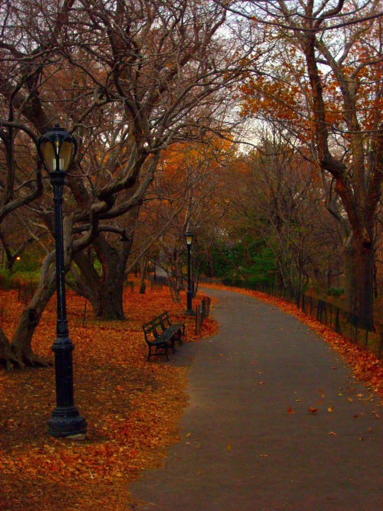 A picture I took in Central Park in Autumn Central park