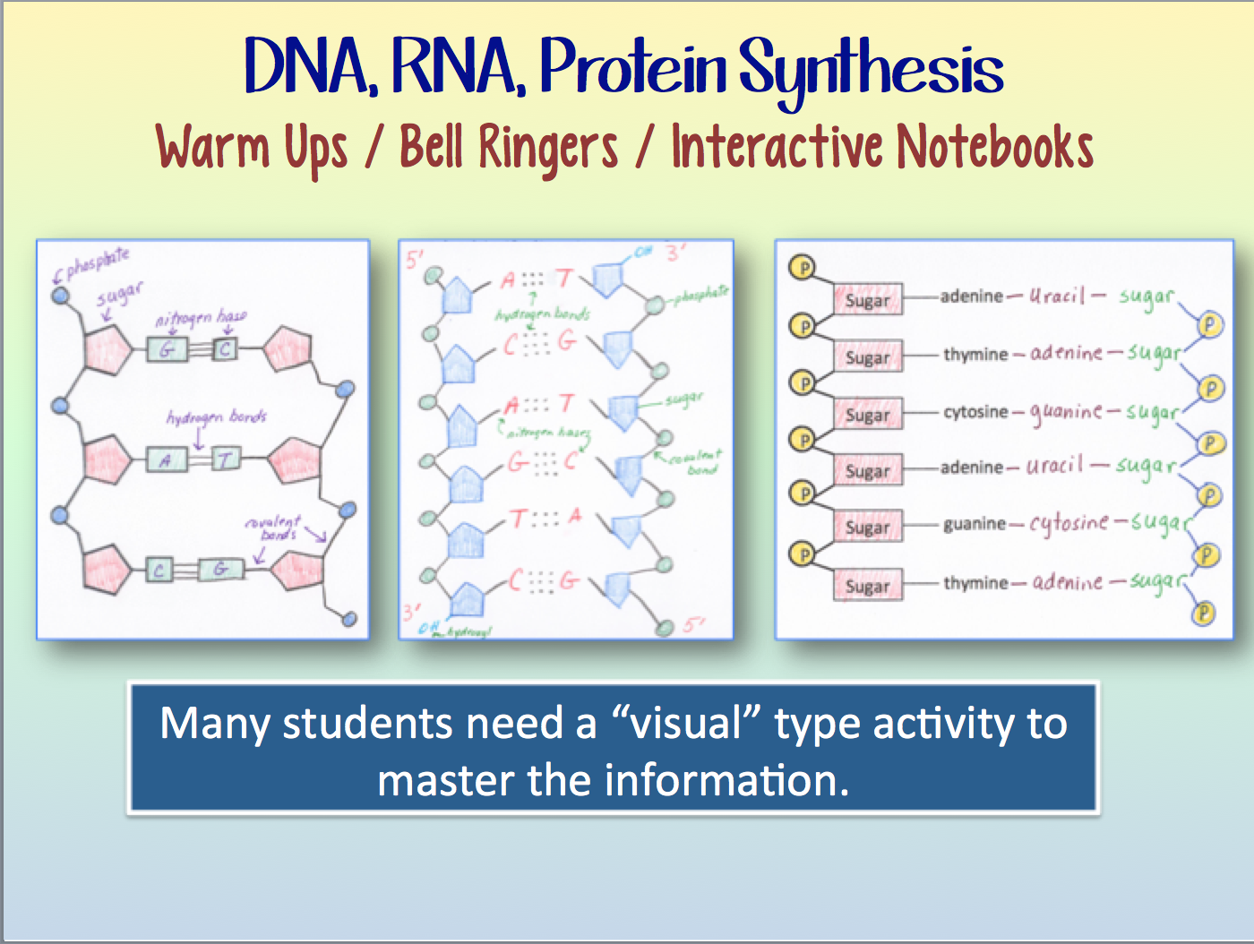 Dna And Rna And Protein Synthesis Warm Ups Or Interactive