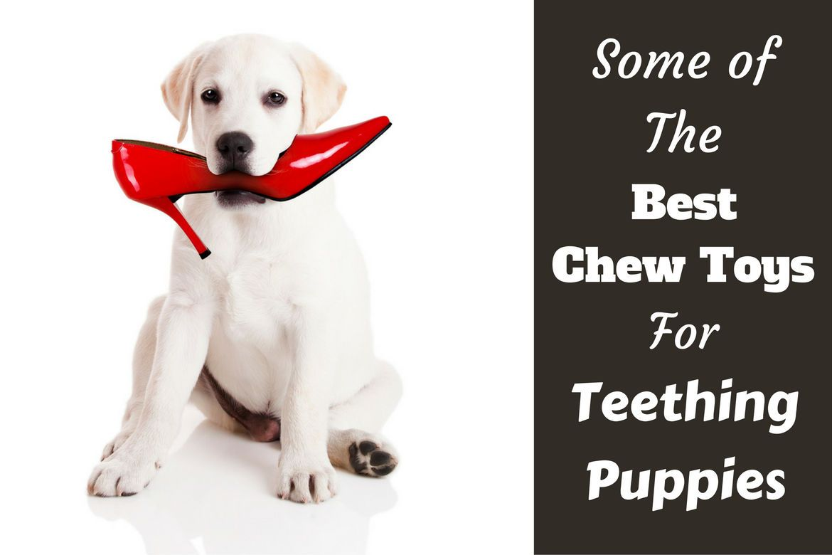 Best Chew Toys for Puppies while Teething | Red stilettos, Puppy ... | Best Dog Toys For Small Dogs