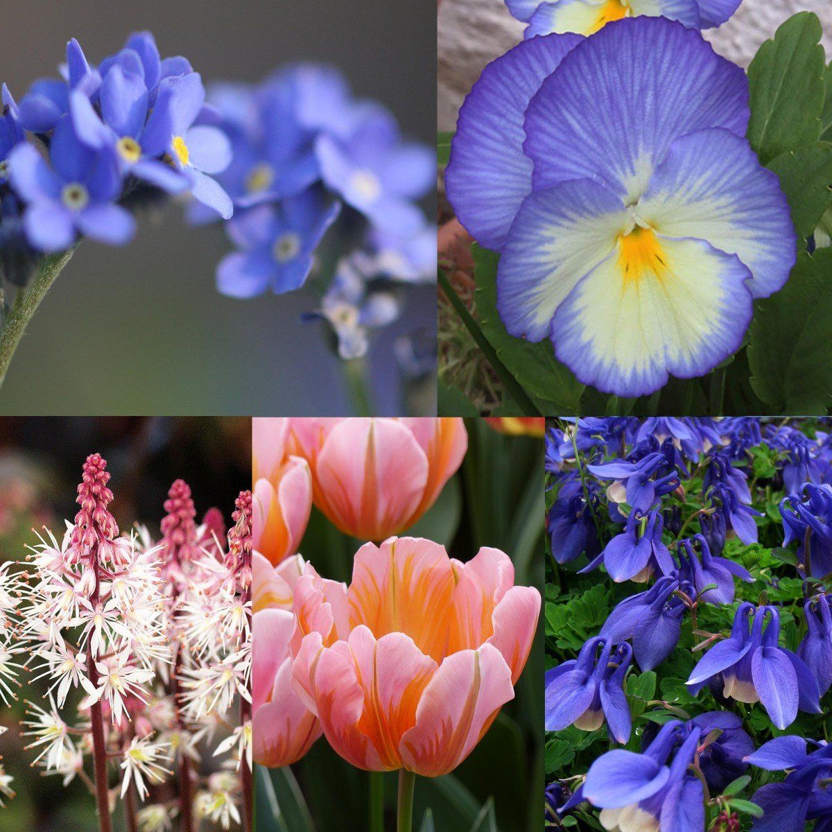 Collection Printemps pastel Bulbes et fleurs