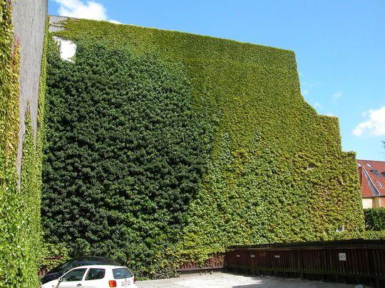 grøn husvæg - Google-søgning