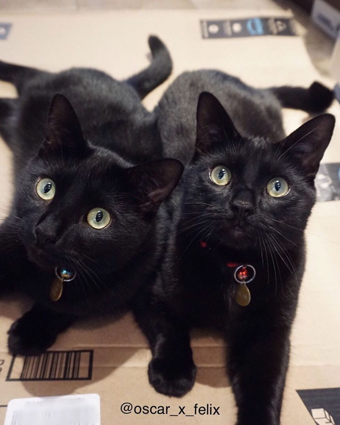 It's blackcatappreciationday !! We just want to let you