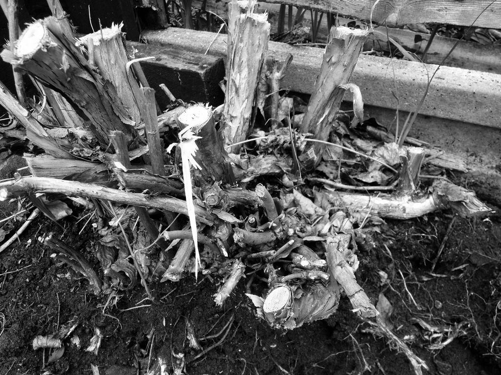Roots black and white photography canon ae 1