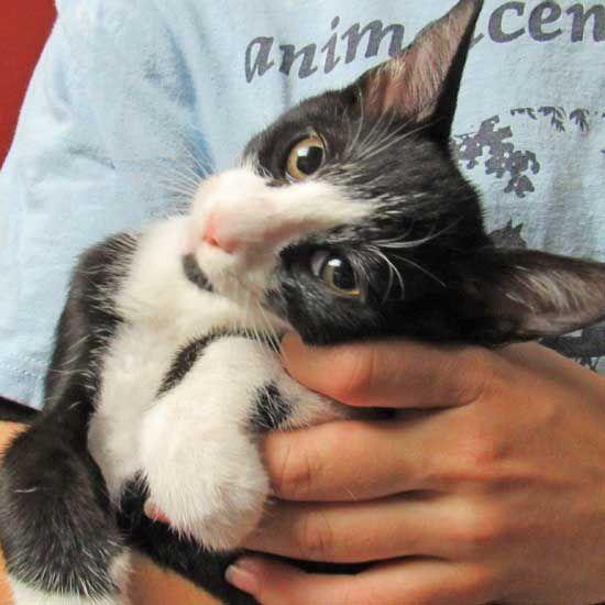 Dog Adoption San Diego Adopt A Dog Cat Adoption San Diego Adopt A Cat Cat Adoption Animals Dog Adoption