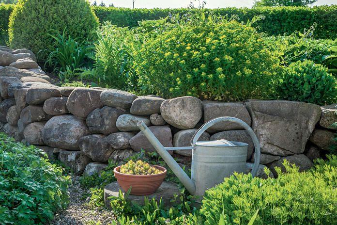 Es Wird Bunt So Legen Sie Eine Blumenwiese An In 2020 Garten Pflanzen Mehrjahrige Pflanzen