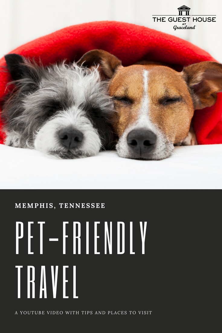 Check Into The Guest House At Graceland With Bella The Dog Learn About Pet Friendly Travel To Memphis Tennessee Pet Friendly In Memphis In 2019 Dog Frie