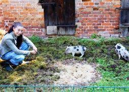 Anna Und Die Schweine Tierfutter Dinner Medien