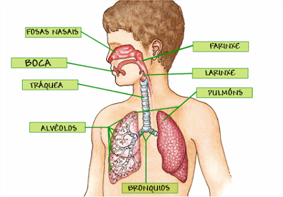 Aulatic O Aparato Respiratorio Fabricamos Un Pulmón Artificial Sistema Respiratorio Para Niños Aparato Respiratorio Sistema Digestivo Para Niños